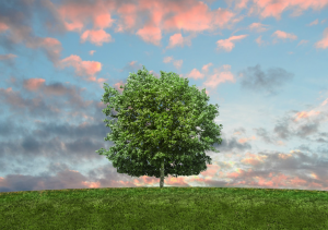 eco friendly tips Tampa Bay